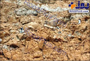 کشف فسیل ماهی 45 میلیون ساله در پاکستان